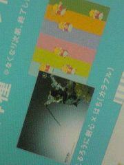 ナツイチ限定 特製ブックカバー るろうに剣心×はち(カラフル) 佐藤健 集英社
