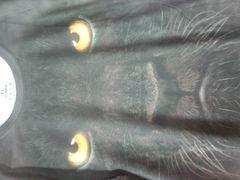 アニマル フォトプリントTシャツ  黒豹