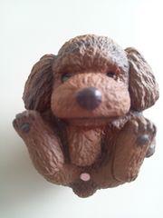 トイプードル まんまるいぬ まんまる犬