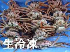 ☆境港産  セコガニ(親ガニ) 中 折れ 15杯  生冷凍