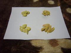 ★甘夏みかん 八朔 河内晩柑宇和ゴールド いよかん各種子約5粒