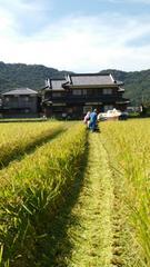 29年産新米★キヌヒカリ(兵庫のブランド米)玄米30�s農家直送