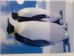 未使用クリアファイルキングペンギン\120