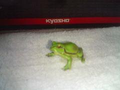 フルタ   日本の動物コレクション1         ニホンアマガエル