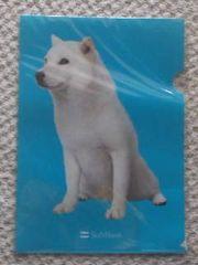 非売品 Softbank ソフトバンク白戸犬(犬パパ)A4サイズクリアファイル
