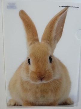 未使用 クリアファイル うさぎ/ウサギ/兎 ¥120