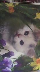 新品 miniバック リアル猫 ショルダーバック♪ 可愛い仔猫♪