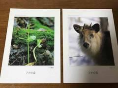 ブナの森  ポストカード4枚  青森県